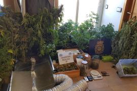 Detenidas cinco personas en Menorca por producción y venta de marihuana