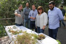 Medi Ambient captura más de 600 carpas en s'Albufera que arrasan el hábitat del parque