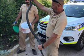 Capturan una serpiente de tres metros cerca de un parque infantil