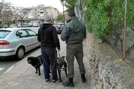 Calvià multa a 49 propietarios de perros por incumplir la ordenanza de Bienestar Animal