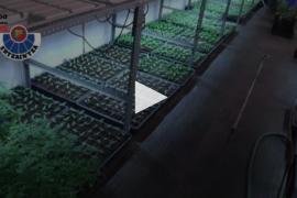 La Ertzaintza desmantela una plantación de marihuana con 5.000 plantas