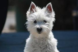 Custodia compartida de un perro para una pareja que fue a juicio por su propiedad