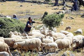 La Serra acoge un plan pionero para adaptar las fincas de montaña al cambio climático