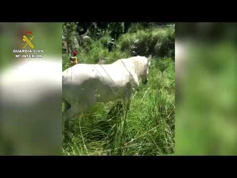 Rescate de un caballo en Escorca