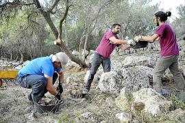 Es Turassot saca a la luz la que podría ser la naveta conservada más grande de Mallorca
