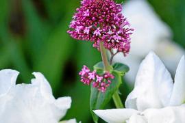 Las mejores imágenes del Jardí Botànic de Sóller