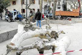 Expectación y polémica por la tala de los árboles de la plaza Constitució de Sóller