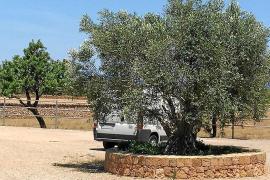 Detectan falsos cobradores de la ecotasa en viviendas turísticas vacacionales