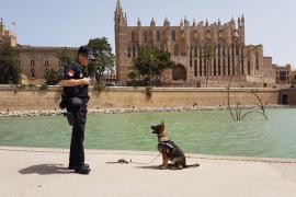 Bris, el nuevo fichaje de la Policía para luchar contra el tráfico de drogas