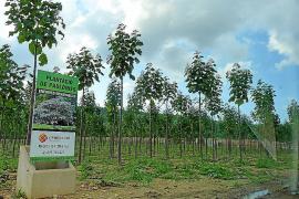 Las energías renovables en el ámbito agrícola, la alternativa rural de futuro