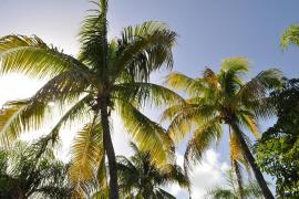 La misteriosa muerte de varios turistas en República Dominicana