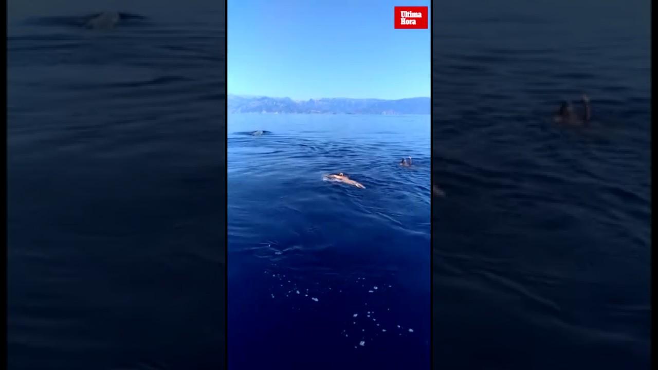 Avistan una cría de cachalote en aguas de Sóller