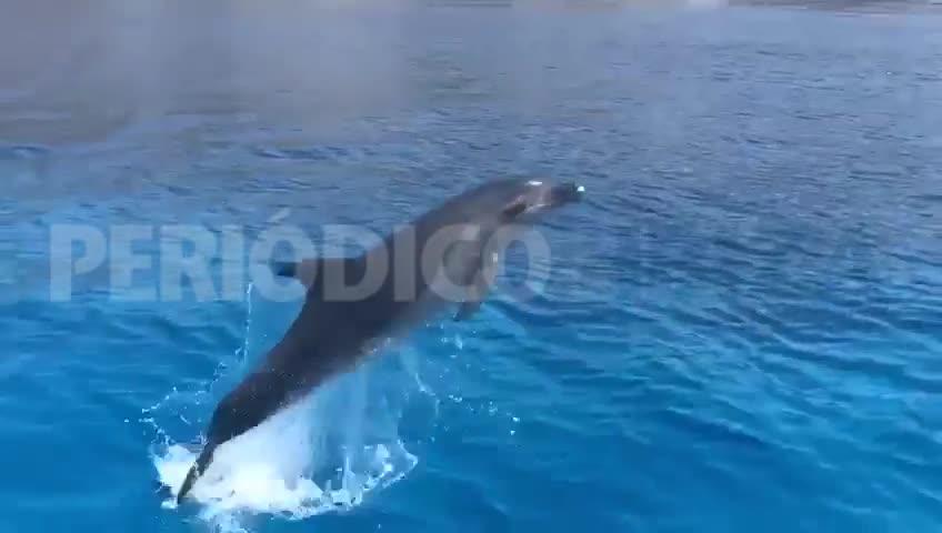 VÍDEO | Avistamiento de delfines en Formentera