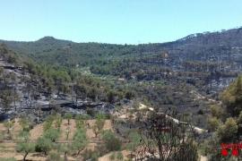 El incendio en La Ribera d'Ebre, Tarragona, está perimetrado y camino de estabilizarse