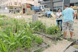Un huerto urbano para los vecinos de Son Espanyolet
