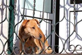 Detenida la dueña del perro que murió atado a un balcón por un golpe de calor