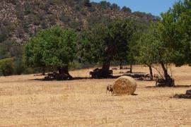 El calor cede pero el riesgo de incendios persiste en Baleares