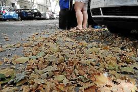 La caída de hojas es para el verano
