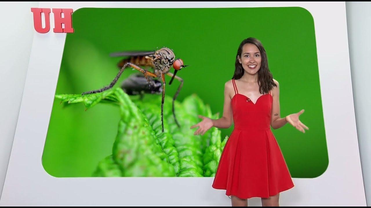 ¿Cómo evitar que te piquen los mosquitos?