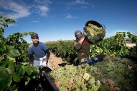 El cambio climático dejará el cultivo de viña en «grave» peligro