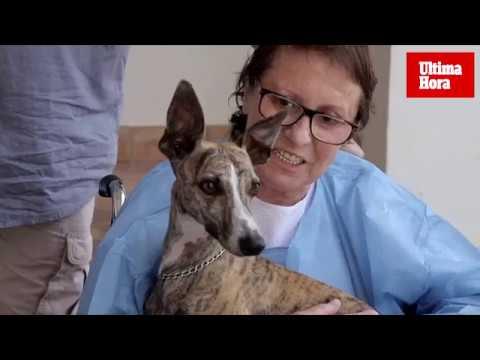 Mascotas que también curan
