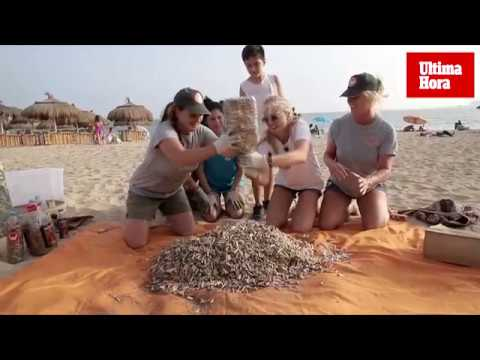 Ochocientas colillas en la playa de Can Pere Antoni
