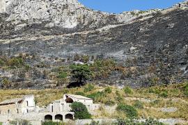 Más del 50% del área incendiada en 2013 en Andratx ya presenta cobertura vegetal