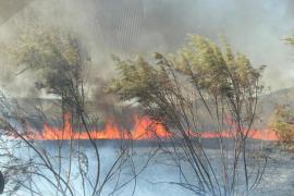Incendio en Sa Pobla