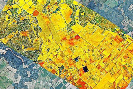 Agricultura investiga la incidencia de la 'Xylella' con imágenes aéreas