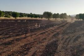Controlados los incendio de Selva y Algaida