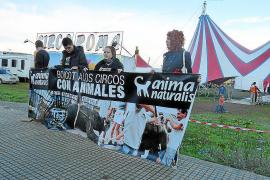 El Ajuntament prohíbe los circos con animales salvajes en terrenos municipales