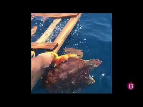 Salvan a una tortuga de morir atrapada entre basura