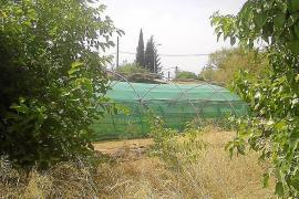 La UIB alegará contra la orden de derribo de un invernadero