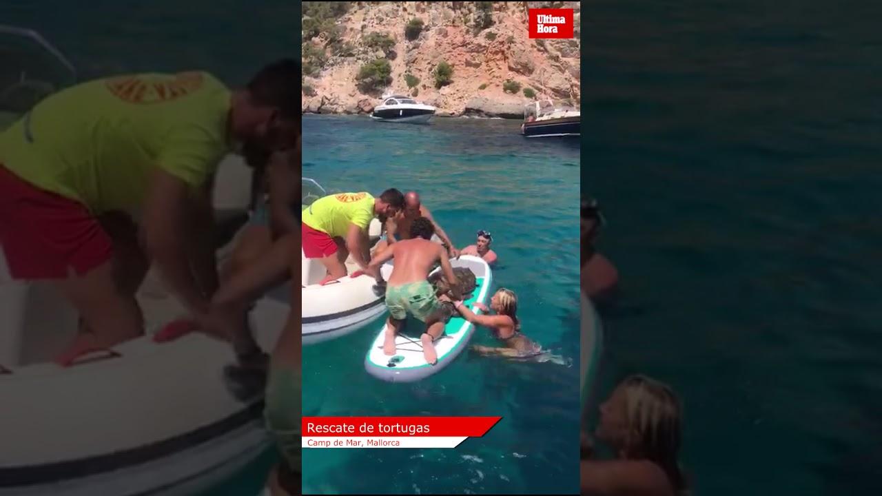 Rescate de dos tortugas en apuros en Camp de Mar