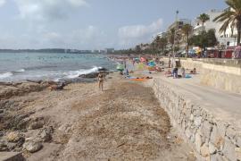 Cala Millor se moviliza ante la 'ineficacia' de Costas para regenerar la arena de la playa