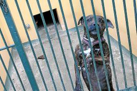 Los animalistas denuncian la muerte de un perro desangrado en Son Reus