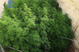 La pareja detenida en Porto Cristo hizo obras ilegales para ocultar la marihuana