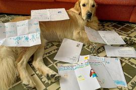 Assisi, el perro que recibe cartas durante sus vacaciones en Mallorca