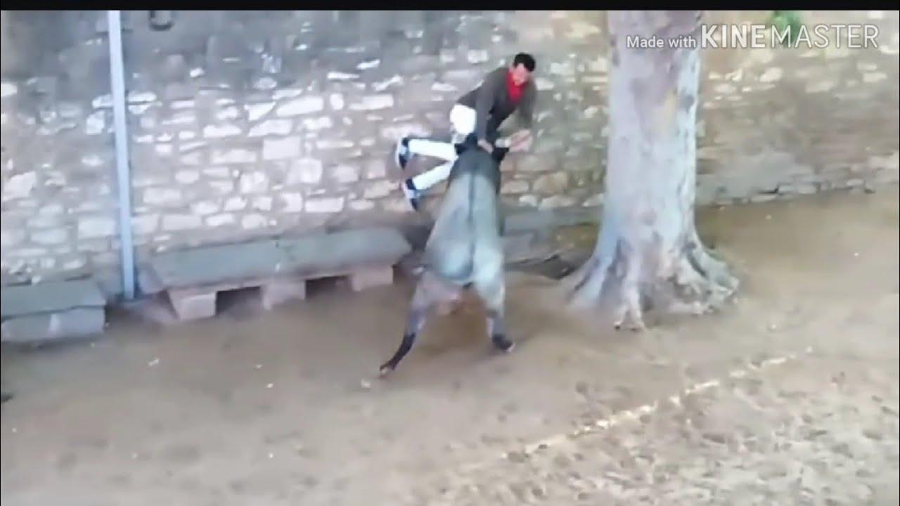 Un corredor, herido con dos cornadas en el encierro de Tafalla