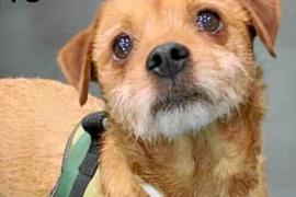 Piden ayuda para encontrar a un can desaparecido en Palma