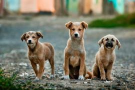 La Policía salva a varios cachorros abandonados en un contenedor