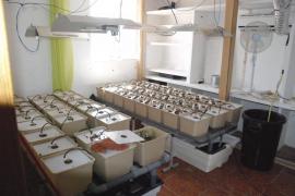La policía descubre una «fábrica» de marihuana en una finca de   Palma