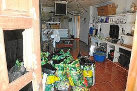 Detenido en Palma un clan familiar que se dedicaba a la venta de marihuana al por mayor