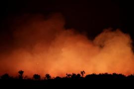 Incendios en el Amazonas: Seis cosas que puedes hacer para cuidar el pulmón del mundo