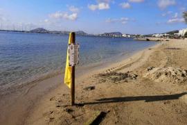 La contaminación fecal en el mar obliga a restringir el baño en la playa de Albercuix, en Pollença