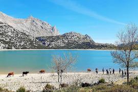 El agua desalada ya supone casi un tercio de toda la que se consume en Palma