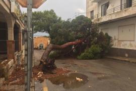 Santanyí recoge datos sobre las incidencias del temporal para crear un censo de afectados