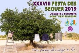 La Festa del Sequer de Lloret regresa y busca preservar la tradición