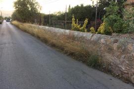 Hierbas que invaden la calle en Son Espanyol