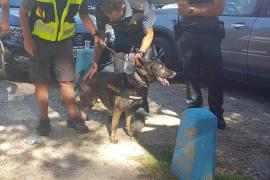 Xena, la perra que en su día libre encontró a Blanca Fernández Ochoa
